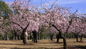 La Quinta de los Molinos, en Madrid