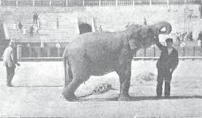Aquí vemos al elefante Nerón, antes de comenzar el 'espectáculo'. Madrid, 1898