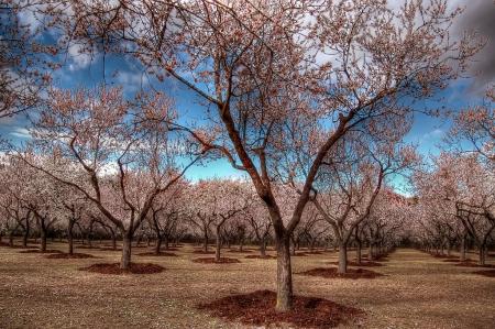 Quinta de los Molinos con los almendros en flor, en Madrid