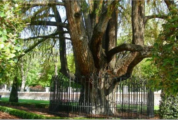 El 'árbol-cañón' de Madrid