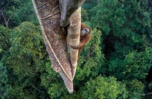 Exposicion Wildlife Photographer of the Year en Madrid