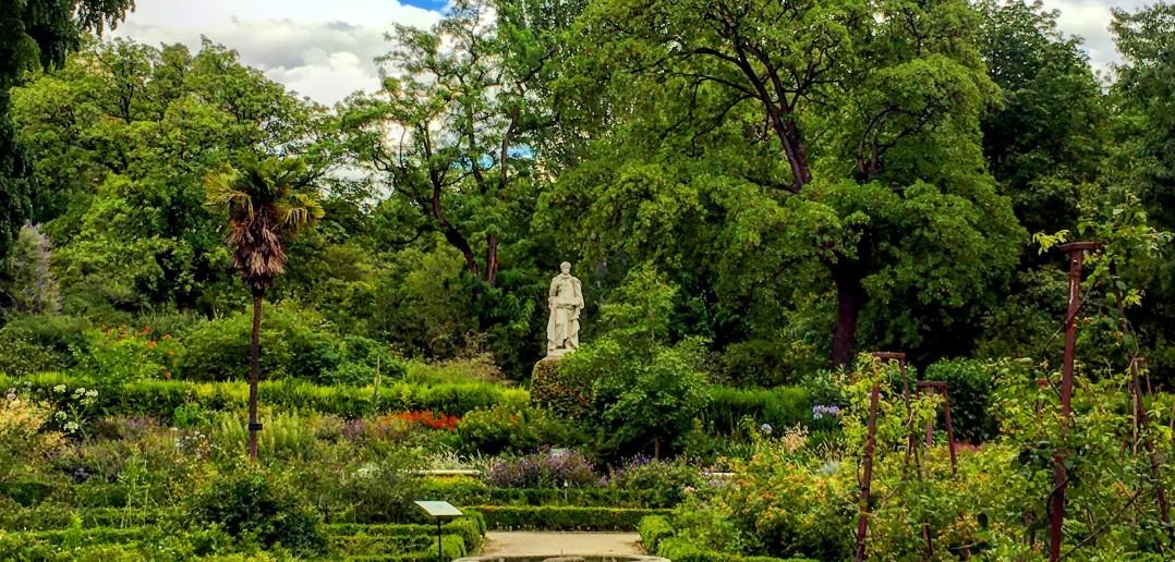 El real jard n bot nico de madrid for Precio entrada jardin botanico madrid